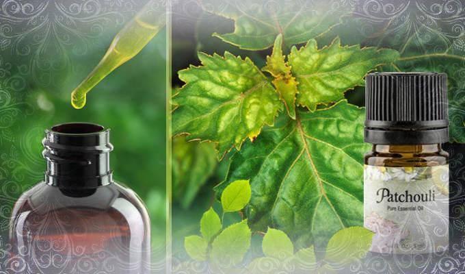 Свойства и применение эфирного масла пачули