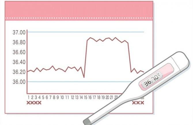Менструальный цикл: повышение температуры перед месячными