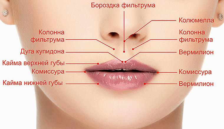 Родинка на нижней губе слева значение