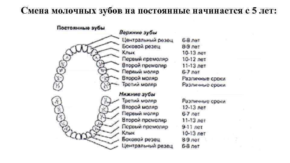 Все молочные зубы выпадают или нет