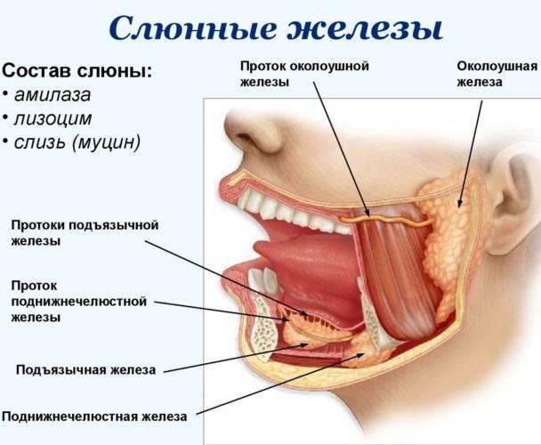 Почему появляется соленый привкус во рту: 15 распространенных причин