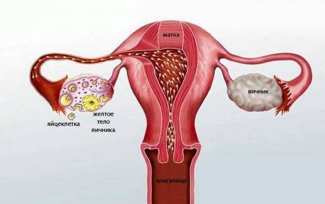 Почему возникает киста желтого тела при беременности на ранних сроках?