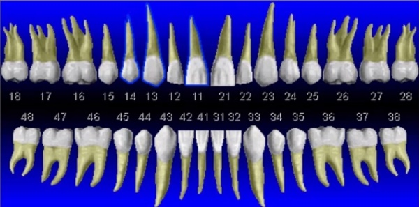 Какая существует последовательность записи зубов в квадрантах формулы?