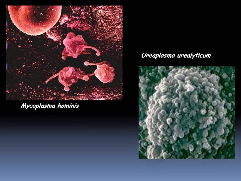 Микоплазмоз