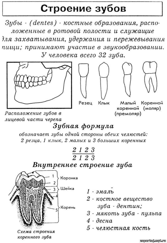 Заболевания зубов и полости рта у человека: причины, список названий с фото и описанием
