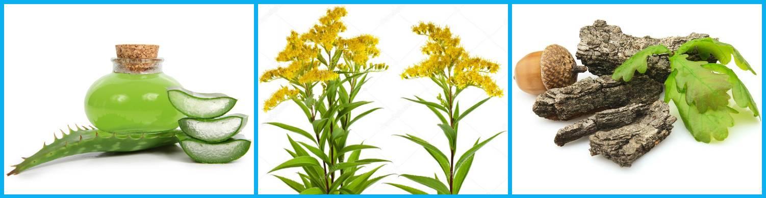 Травы для десен при воспалении