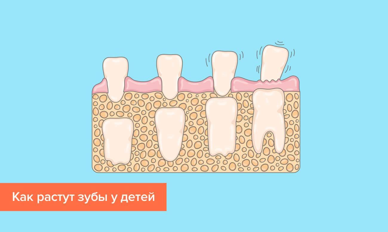 Есть или нет корни у молочных зубов, как они выглядят, как происходит рассасывание?