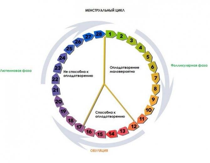 Фолликулярная фаза цикла