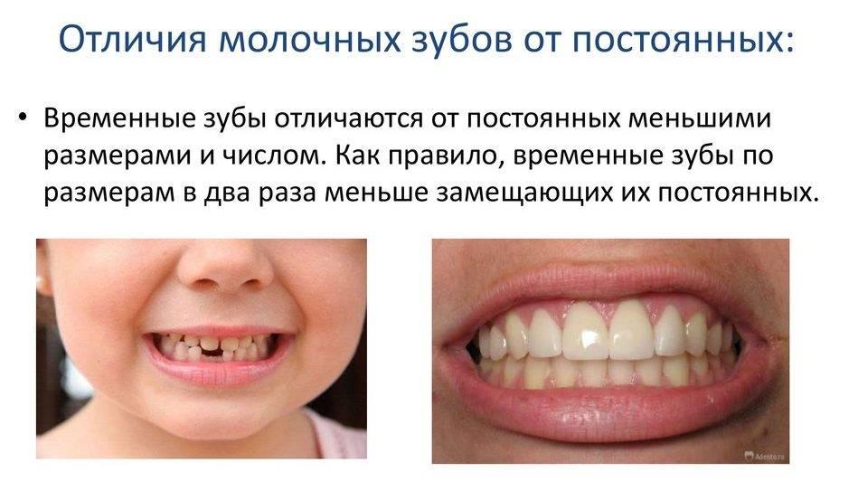 Зубки и уход за ними.