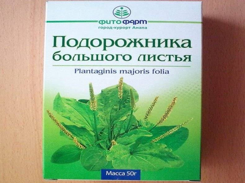 Семена подорожника лечебные свойства при бесплодии у женщин