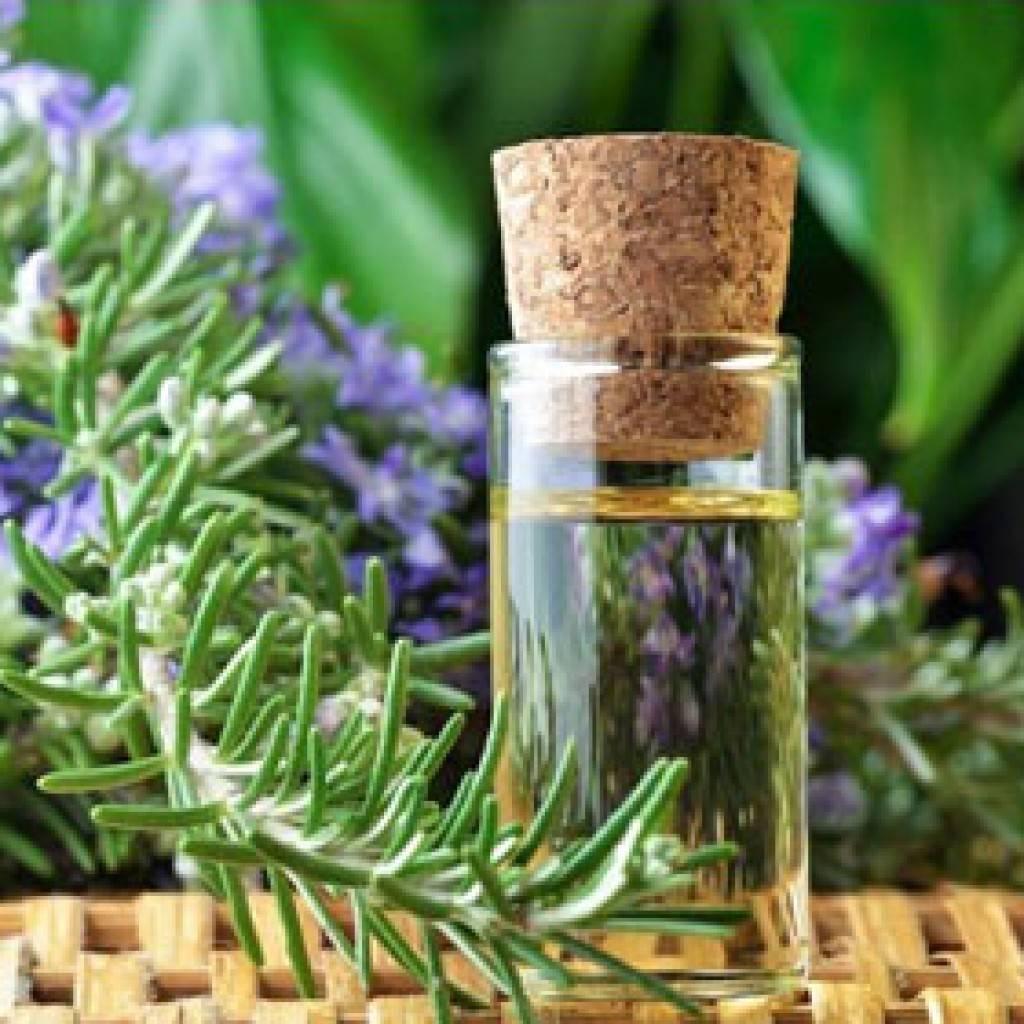 Эфирное масло розмарина против выпадения волос и другие полезные свойства