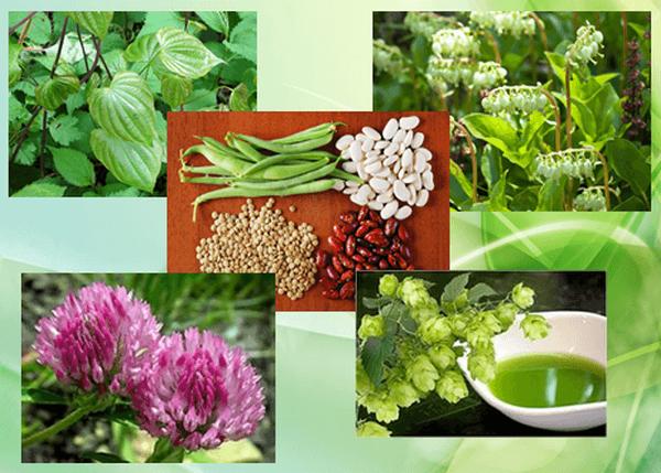 Помогут ли травы при климаксе при приливах? народная терапия в этом плане реальная скорая помощь