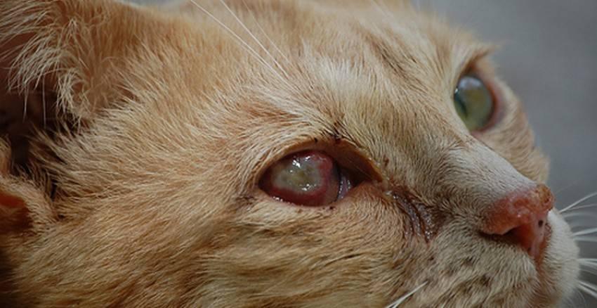 Болезни зубов у кошек: причины заболеваний и их разновидности