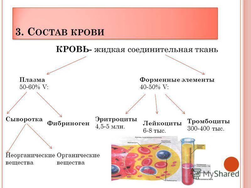 Состав плазмы крови. белки плазмы крови