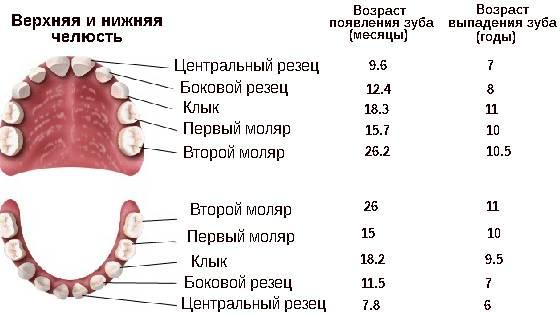 Процесс выпадения молочных зубов у детей