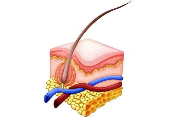 Фурункул на лице — как лечить, причины и симптомы заболевания