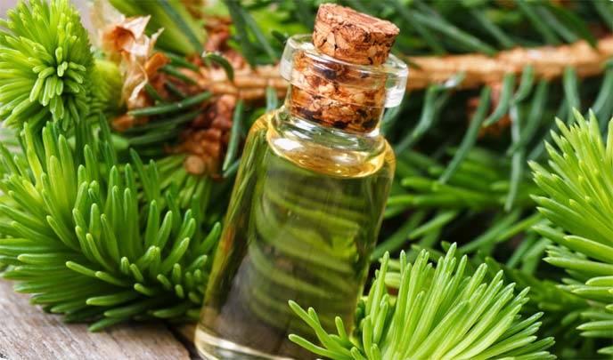 Особенности применения пихтового масла для волос