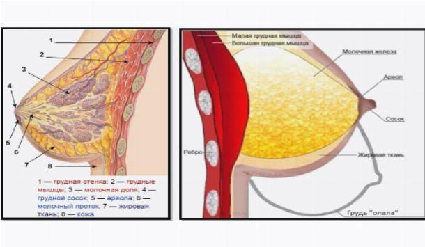 Обвисание груди: причины, виды, методы коррекции и профилактики