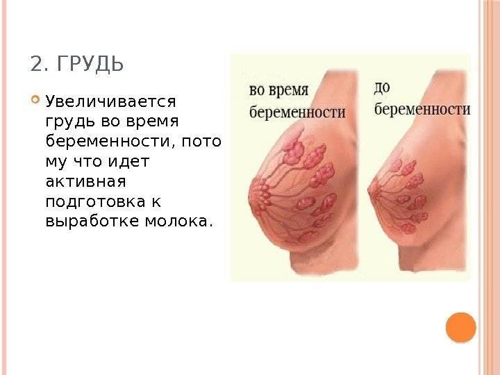 Что происходит с грудью у беременной женщины