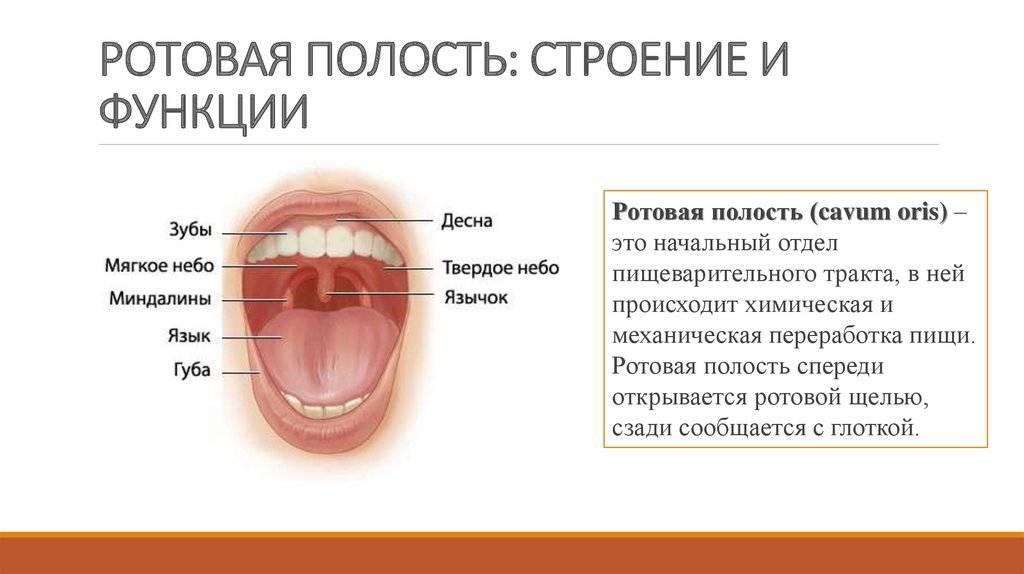 Анализаторы. органы чувств, их роль в организме. строение и функции