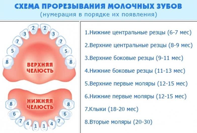 Температура при прорезывании зубов у детей — в каких случаях нужна помощь врача?