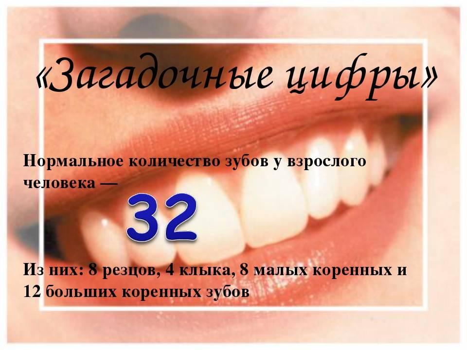 Нумерация зубов в стоматологии схема