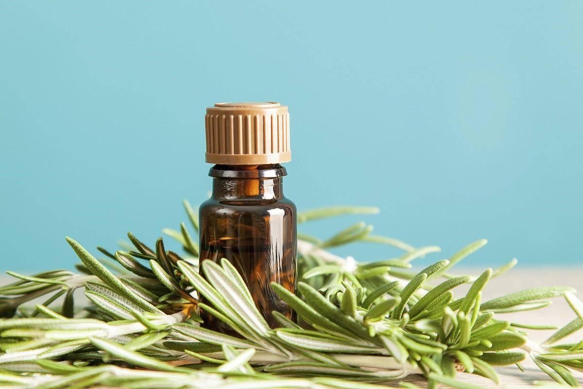 Эфирное масло розмарина. применение для волос.