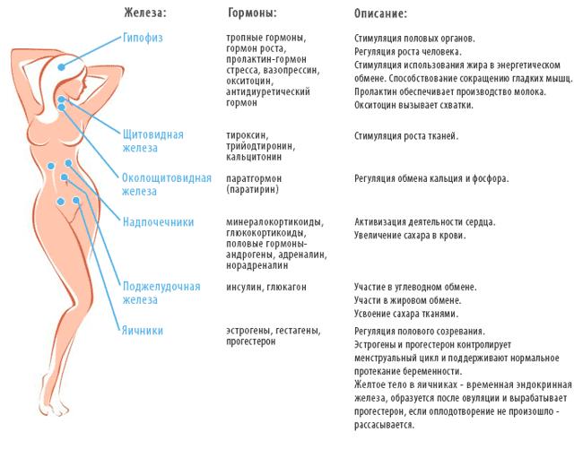 Анализ крови на прогестерон – показания, подготовка, нормы и расшифровка. что влияет на уровень прогестерона в крови?