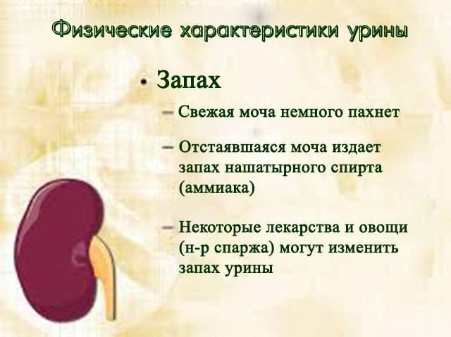 Причины запаха аммиака в моче у женщин