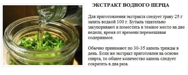 Настойка водяного перца инструкция по применению при месячных