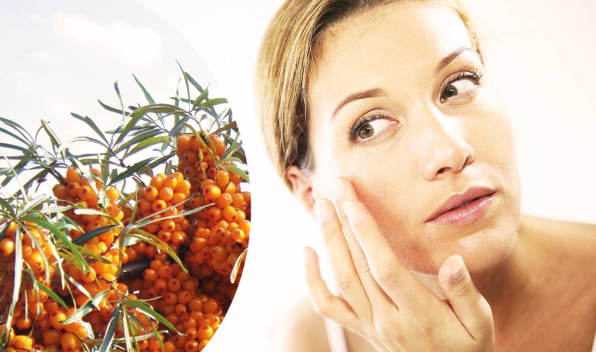 Облепиховое масло: лечебные свойства и применение. противопоказания.