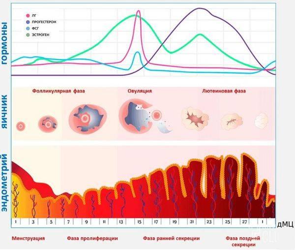 Эндометриоз матки в сочетании с миомой