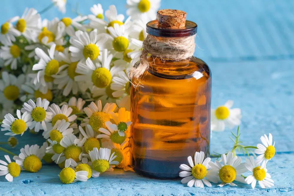 Польза отвара, настоя и других препаратов ромашки для лица