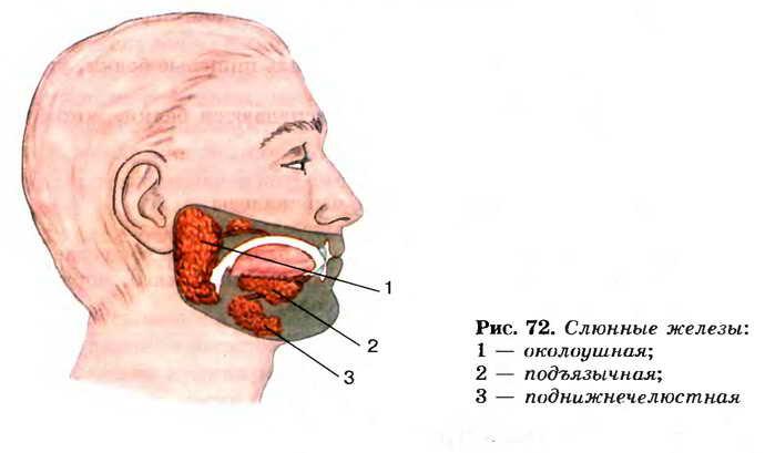 Диагностика и лечение хронического и острого сиалоаденита околоушной и подчелюстной слюнной железы