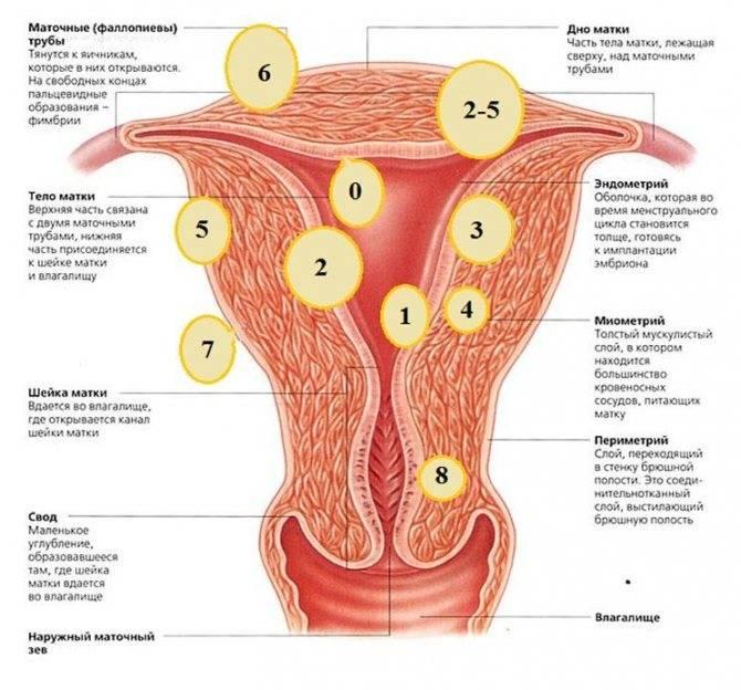 Миома матки киста матки: отличия симптомов и методов лечения