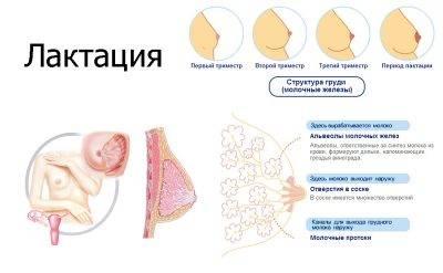 Причины нерегулярной менструации после родоразрешения