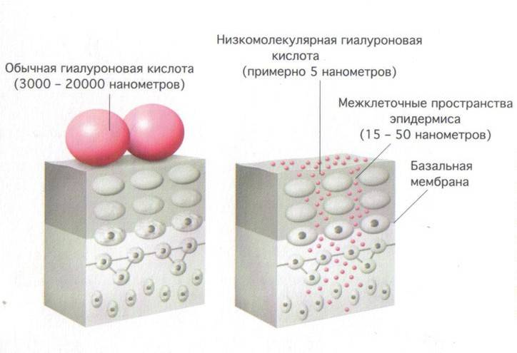 Гиалуроновая кислота и коллаген