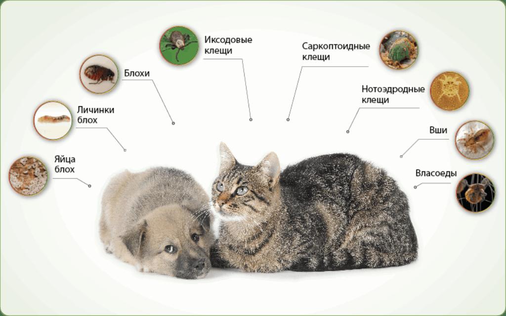 Гингивит у кошек: причины, симптомы, эффективные методы лечения