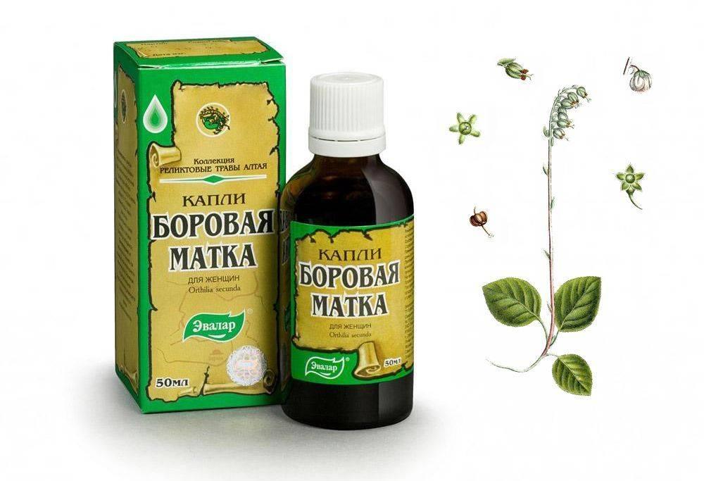 Чай с шалфеем: польза и вред, показания к применению, фиточай из растения, применение для женщин после 50 лет