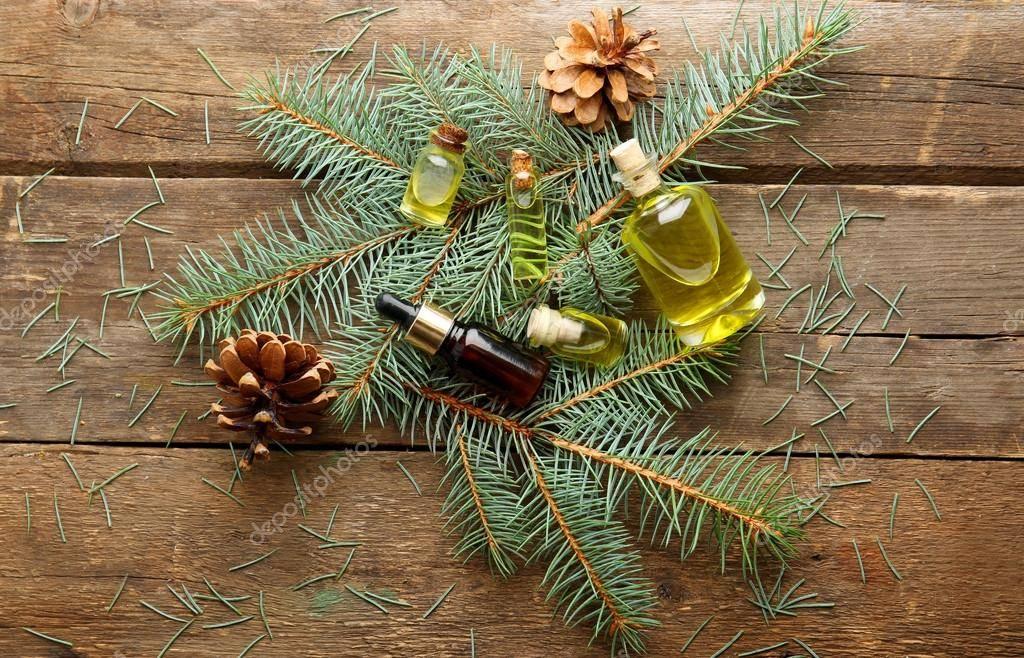 Эфирное масло сосны: свойства и применение для разных типов кожи, рецепты красоты