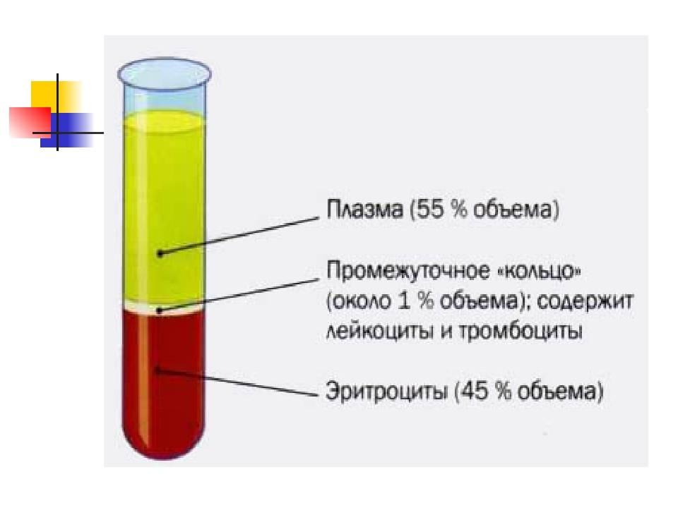 Что входит в состав плазмы крови человека
