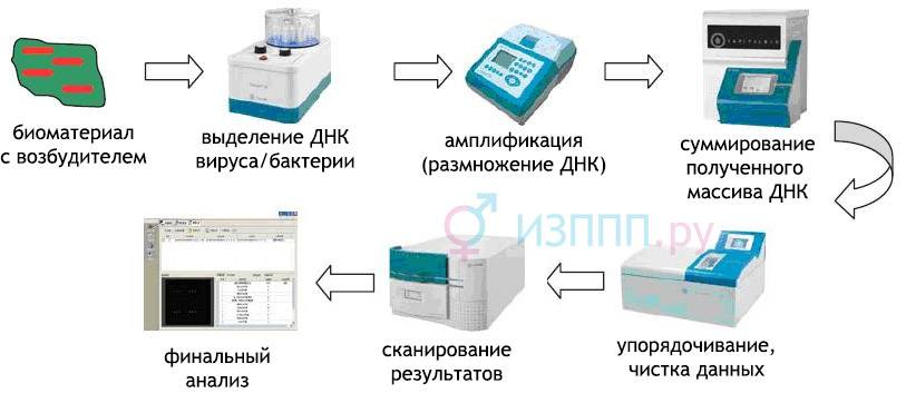 Мазок на флору у женщин. норма, таблица, расшифровка лейкоциты, эритроциты, кокки, при беременности