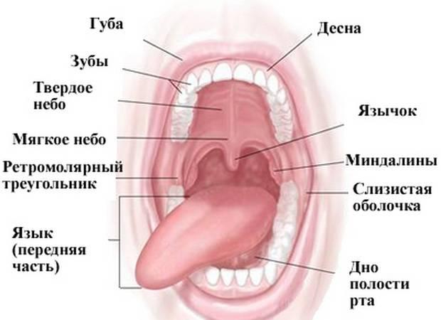 Вестибулопластика — суть и особенности методов углубления мелкого преддверия полости рта