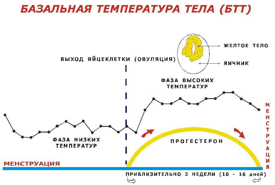 Формула для расчета дня овуляции при цикле 27 дней