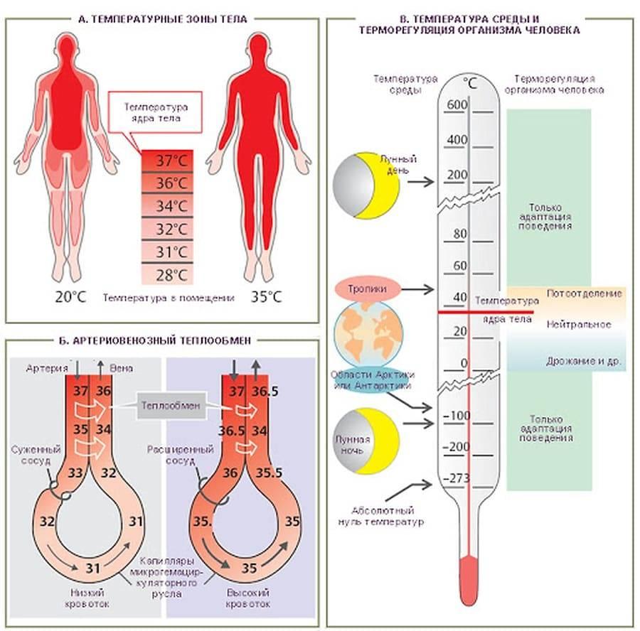 Низкая температура тела 35.5 — 35.9 у взрослых