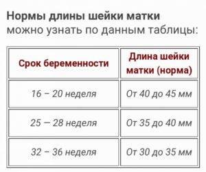 Размеры матки в норме у женщин по узи. таблица по возрасту, нерожавших, при беременности, после родов, при менопаузе