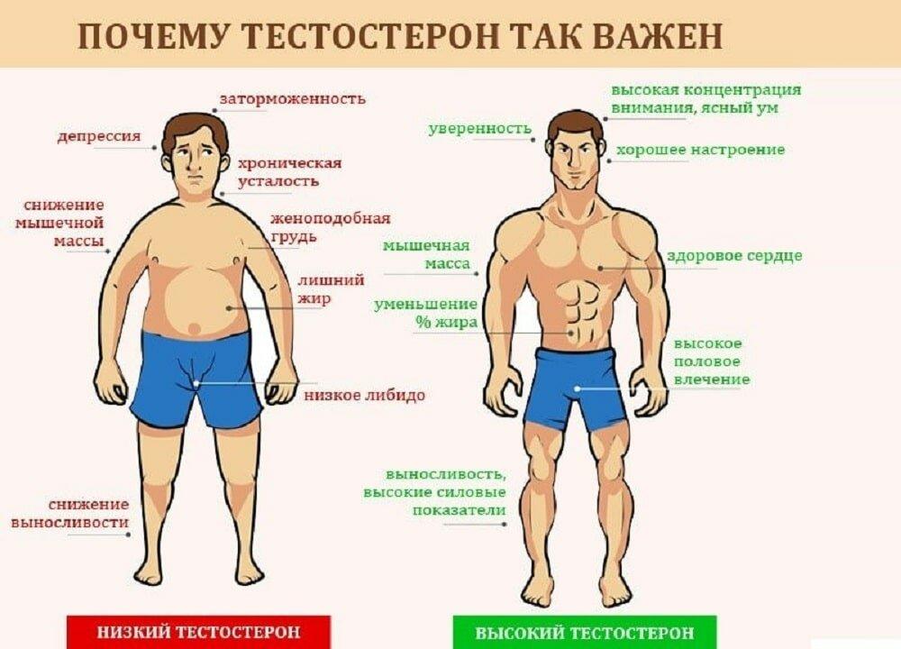 Повышенный тестостерон у женщин. причины и последствия гормонального сбоя