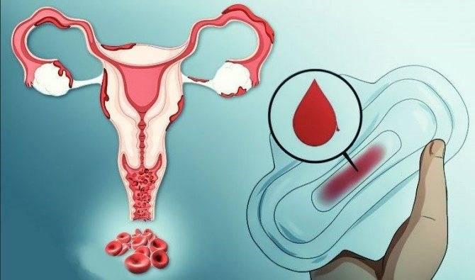 Восстановление менструального цикла после родов. месячные при грудном вскармливании