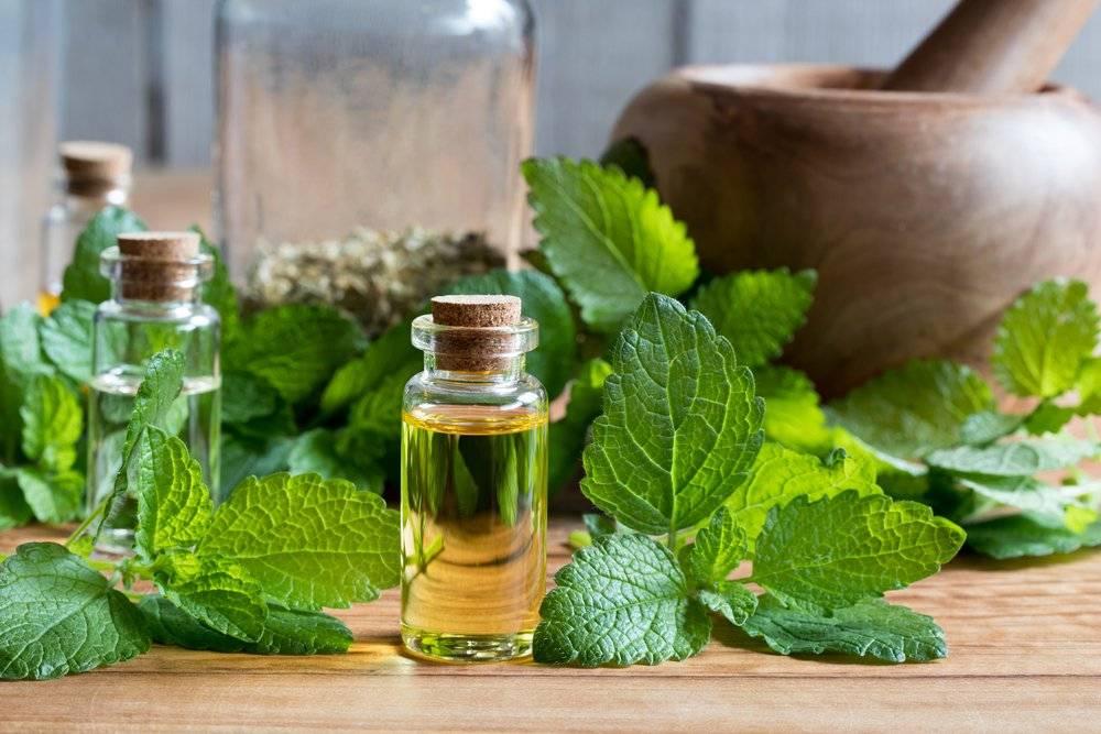 Польза эфирного масла мяты для волос