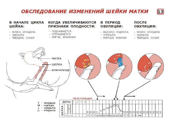 Шейка матки кровит: возможные патологии, их лечение и профилактика